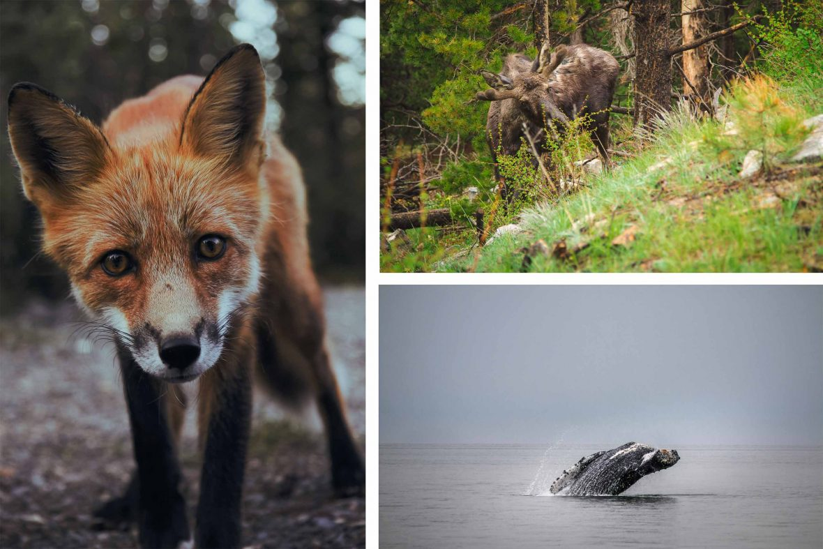 There's no shortage of wildlife in Alaska.