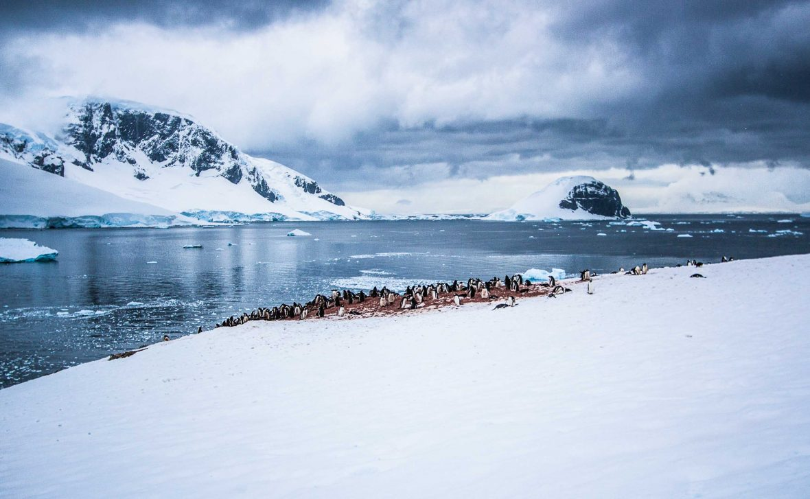 Neko Harbor where a strenuous uphill hike reveals incredible scenery with a colony of gentoo penguins.