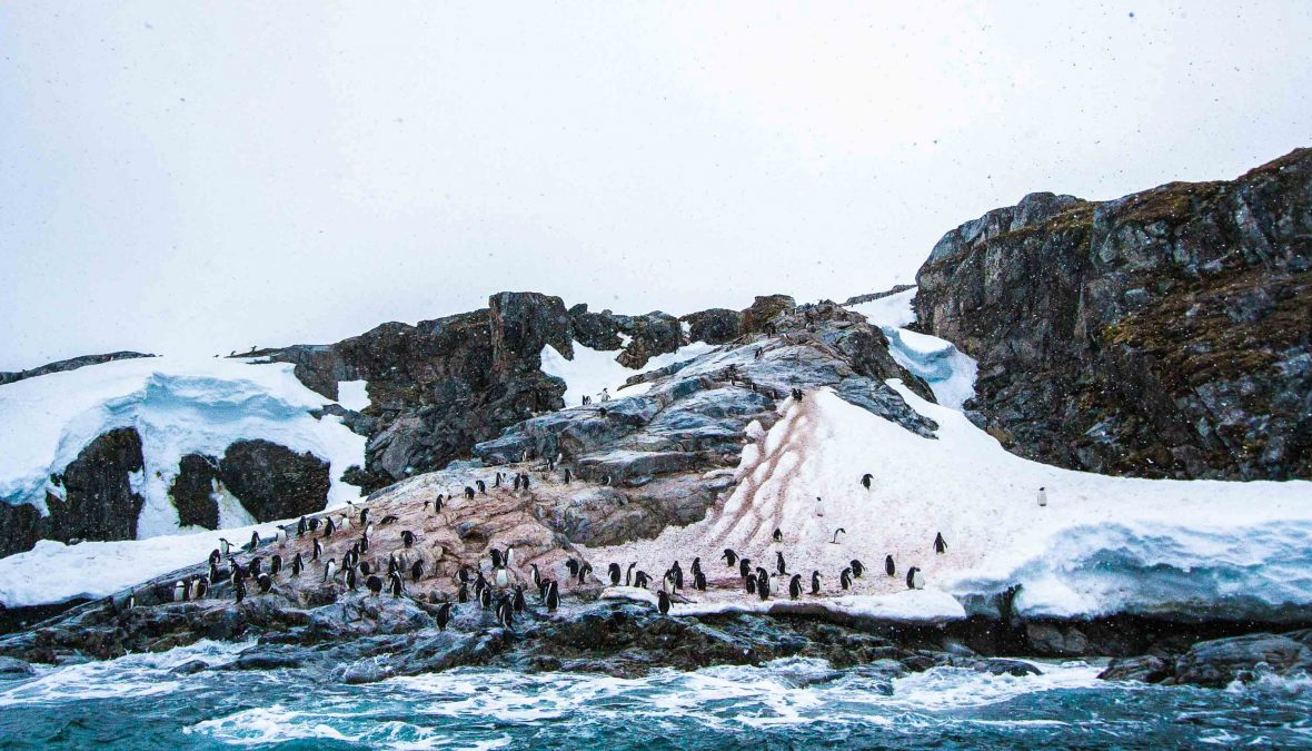 A penguin colony on Danco Island.