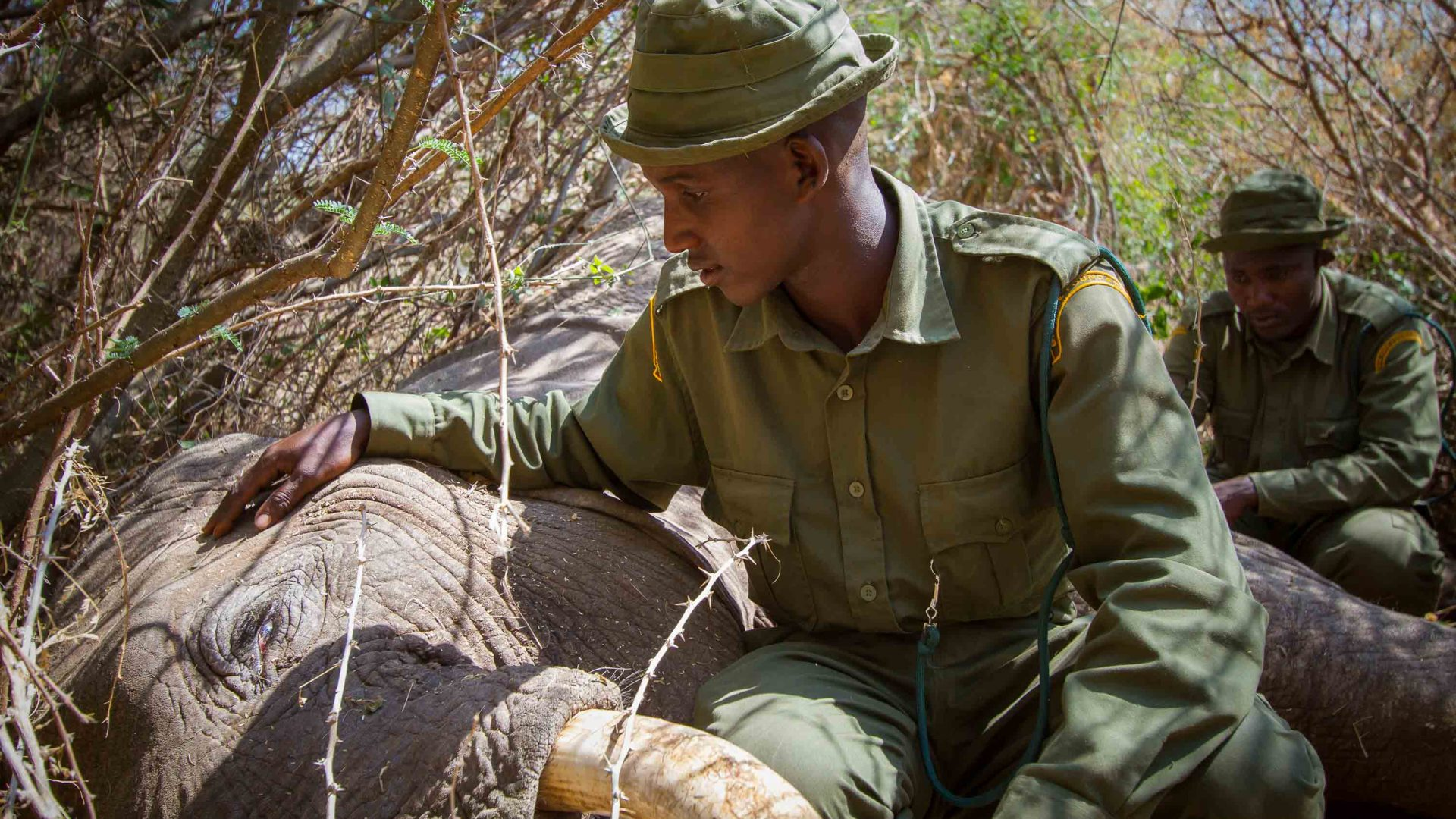 A ranger sits with an elephant who has been killed by poachers.