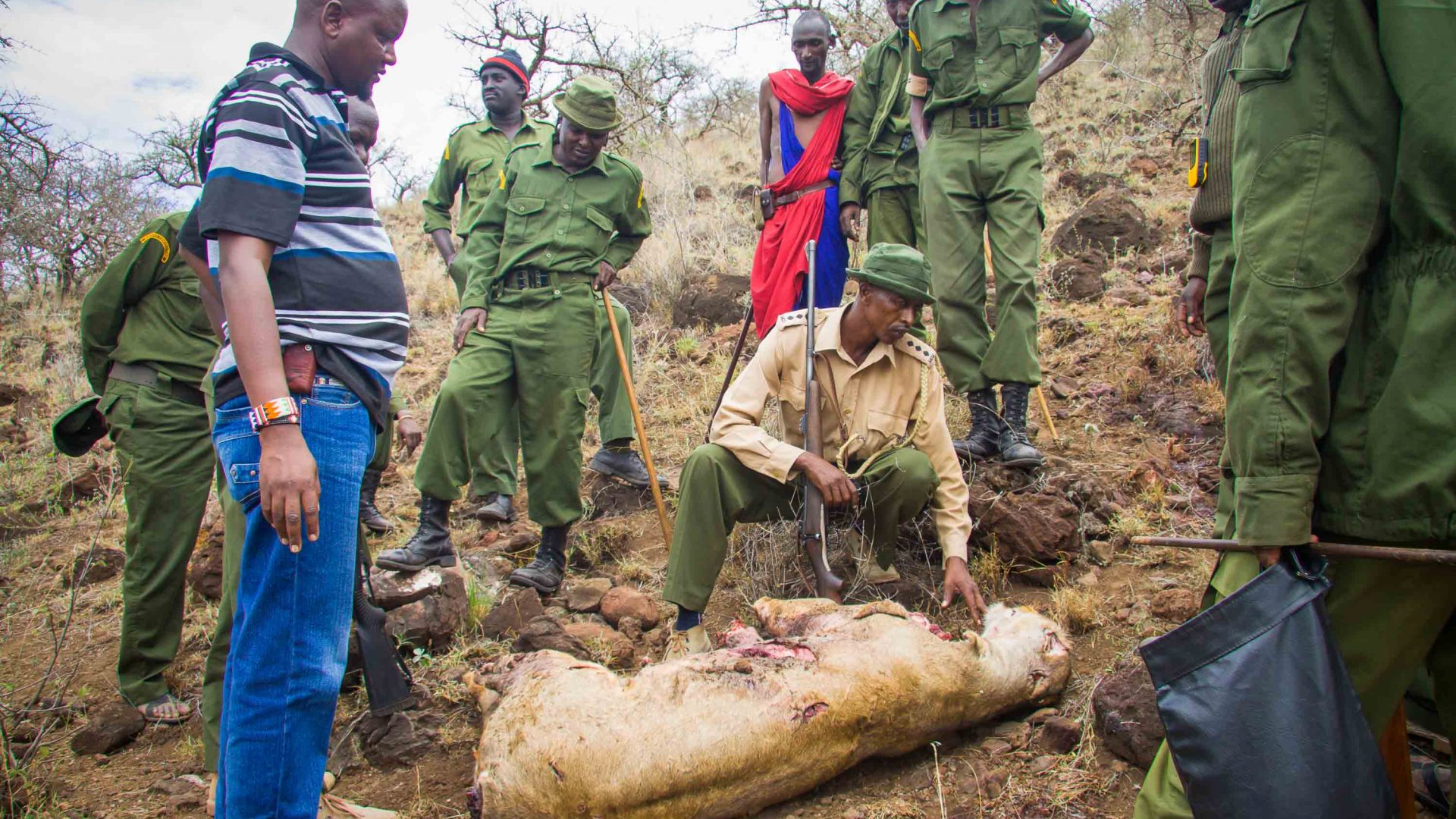 Rangers stand round a poached lion.