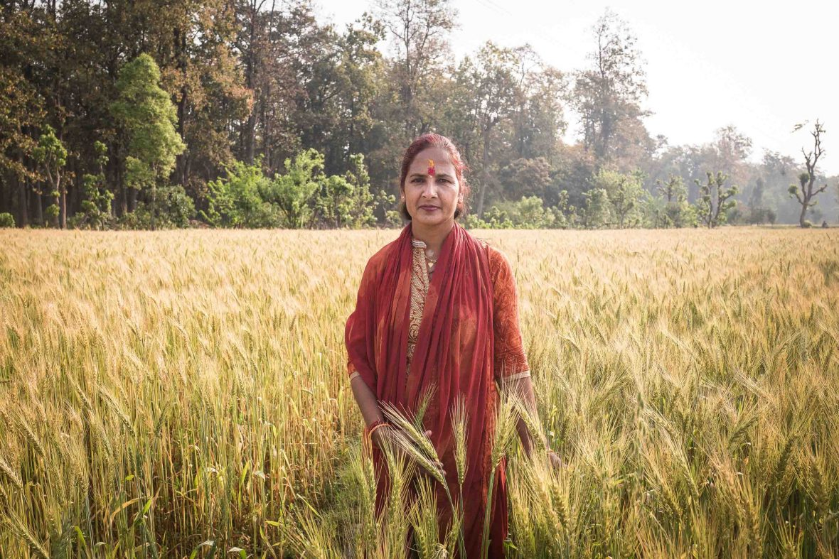 Kamala Sharma got married at the age of 14 but lost her husband a year later. Kamala directed all her energies into agriculture, and now she grows 50 quintals of tomatoes in just 60 square metres of land