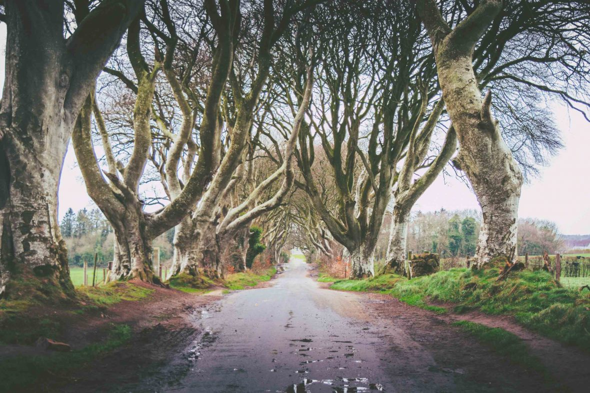 The Dark Hedges, Ballymoney, Northern Island has become a tourist drawcard after featuring in Games of Thrones.