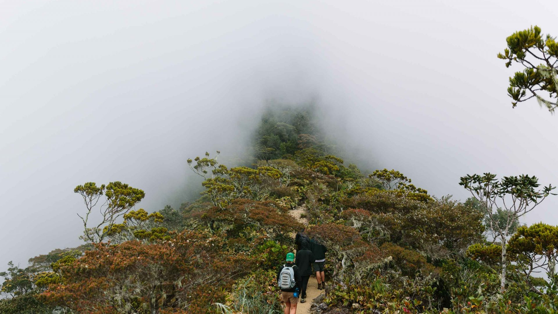 Travelers hike Mount Kinabalu in Borneo.