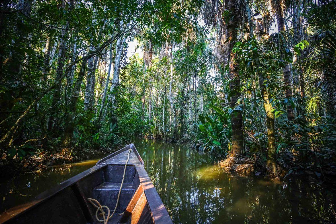 In the Peruvian Amazon close to the gold rush town of Puerto Maldonado.