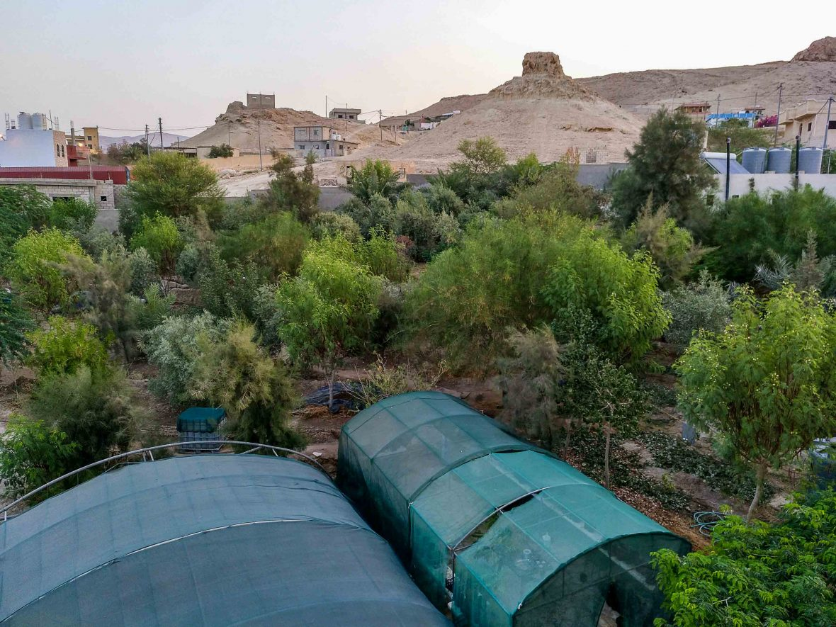 Greenhouses and trees that are part of the Greening the Desert project are a vibrant green against the barren Jordanian desert.