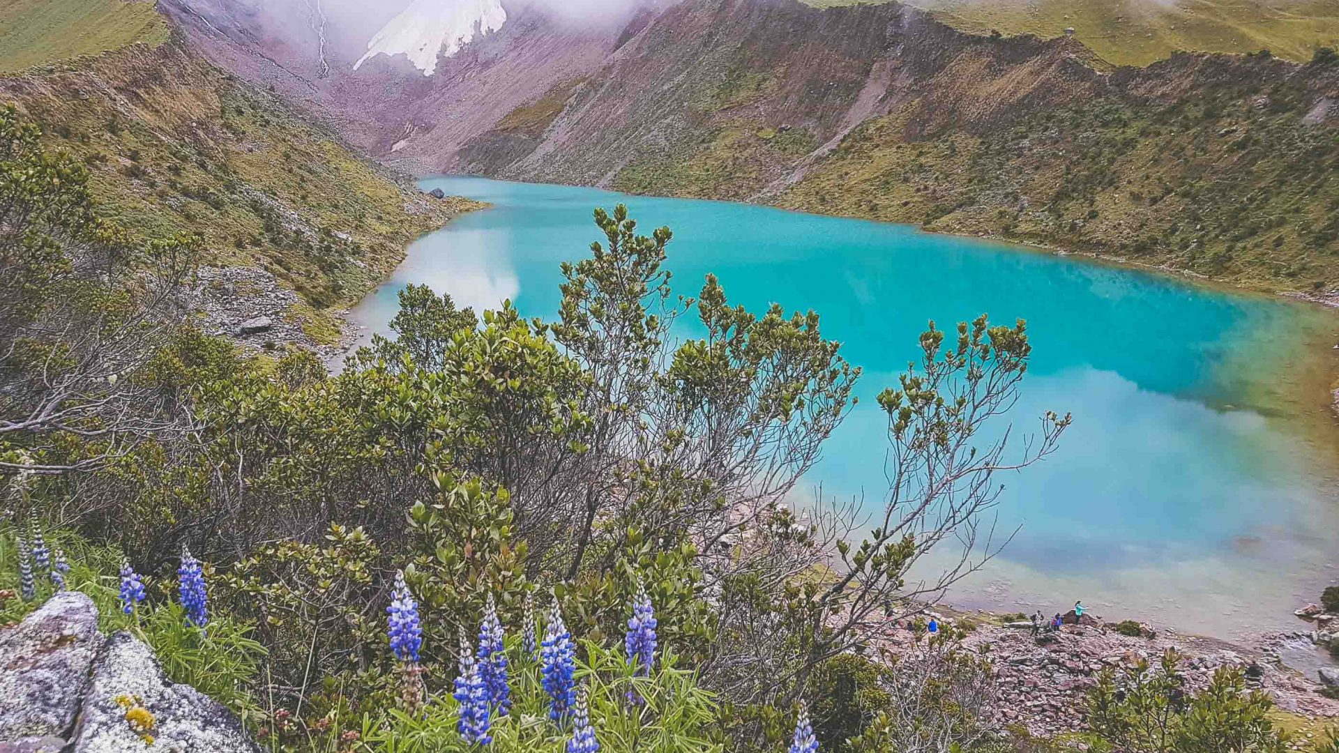 The stunning turquoise Lake Humantay framed by purple lupin flowers greets hikers on the Salkantay hike in Peru.