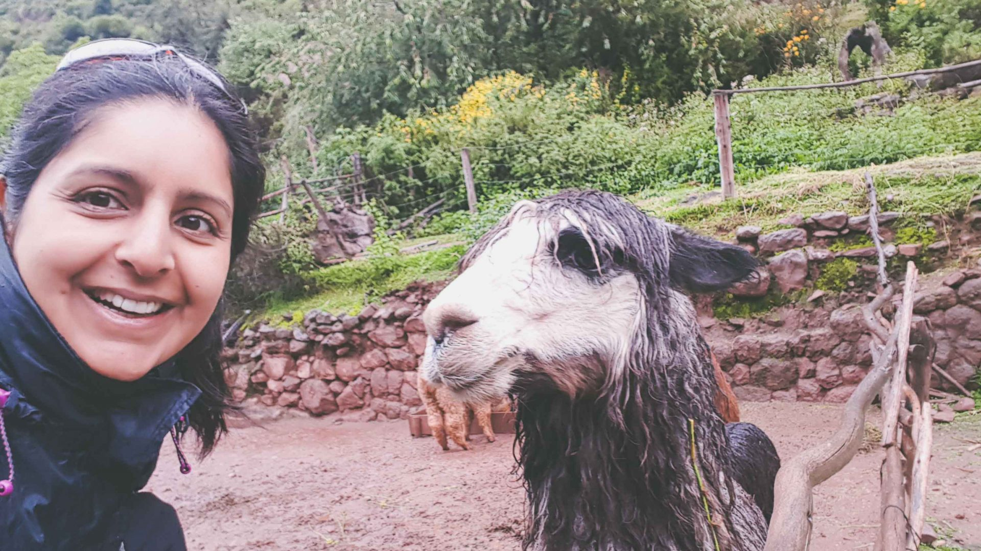 Writer Meera Dattani meets the local llama population.