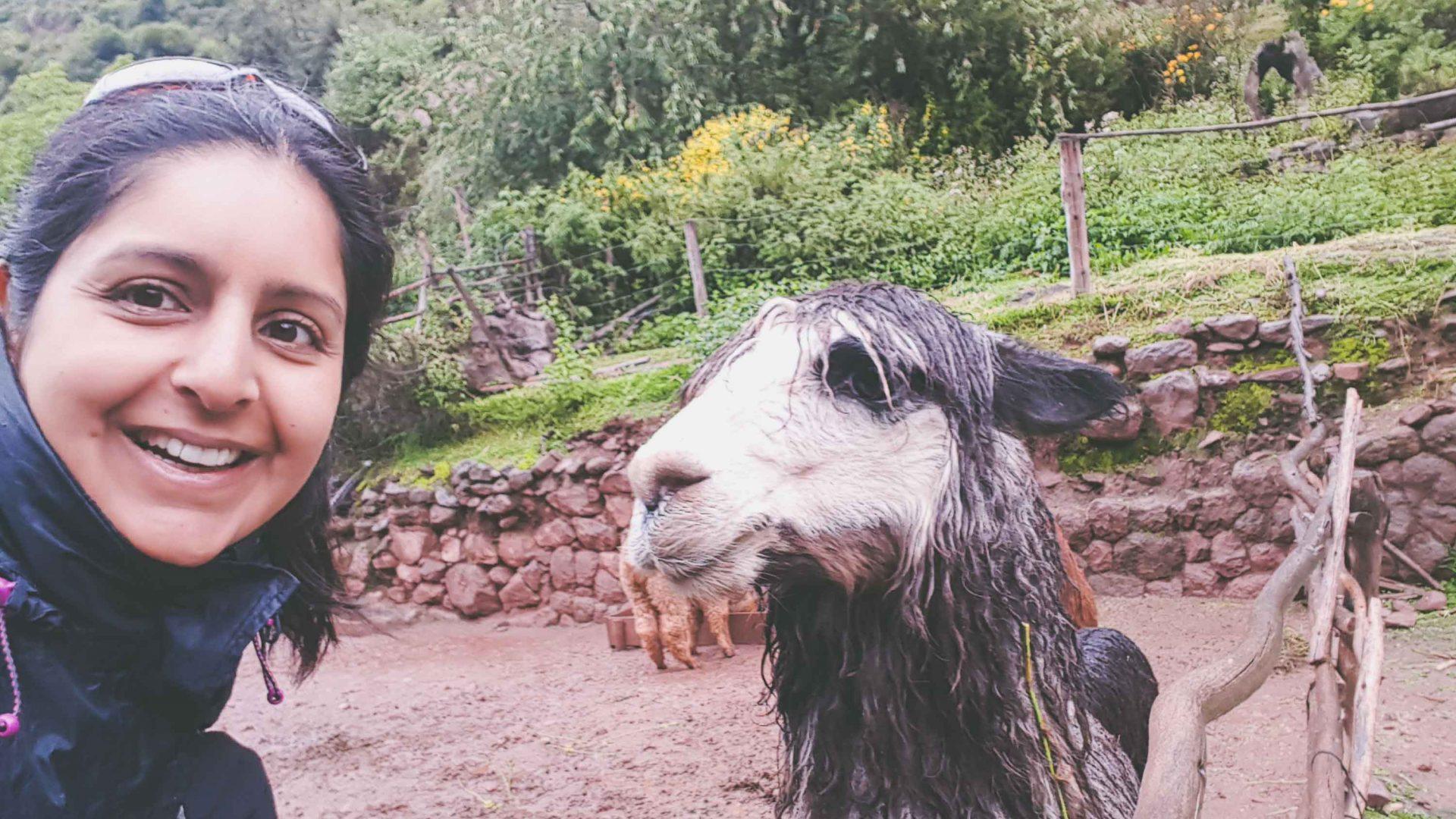Writer Meera Dattani meets the local llama population.