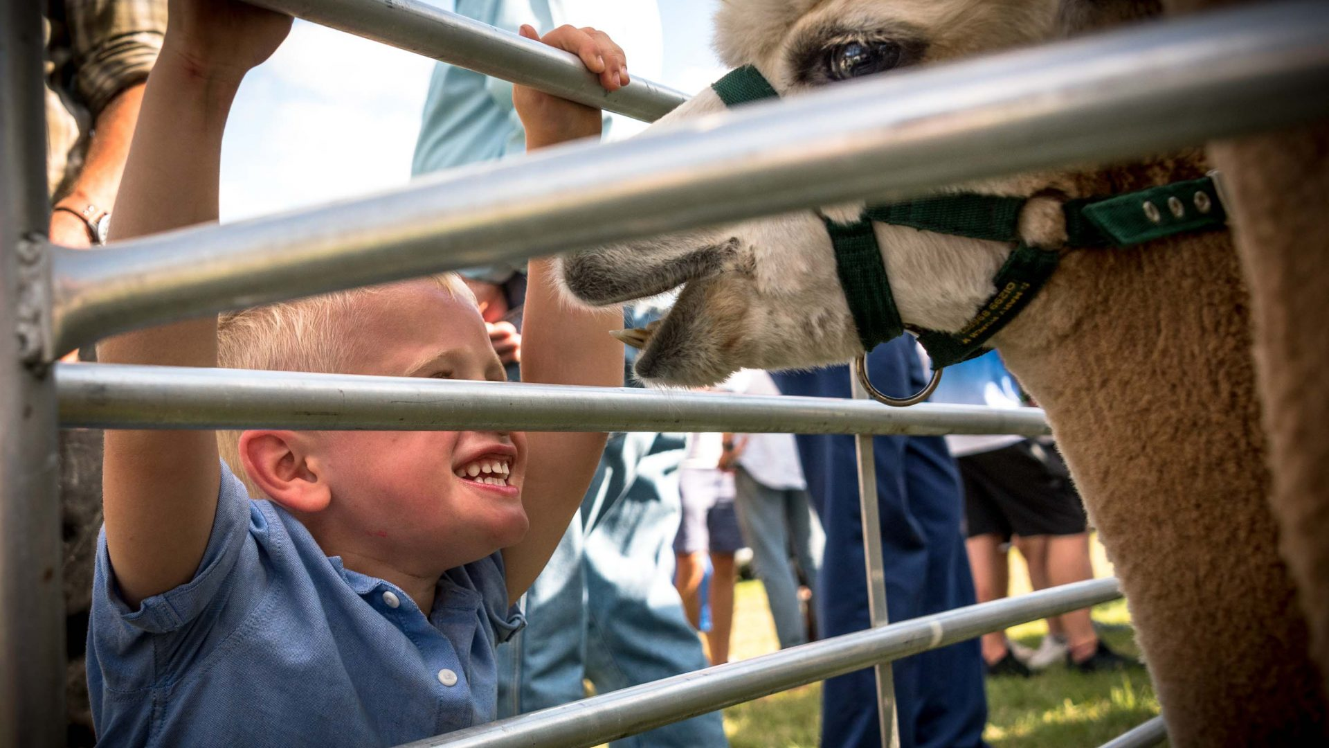 Adults and children alike find entertainment at the Llanthony Valley and District Show.