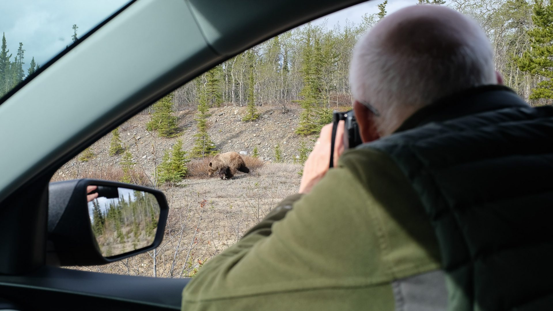 A bear cub by the side of the road, just outside of Whitehorse.