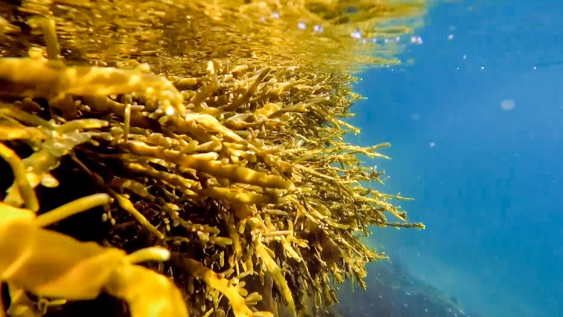 The power of nature: Algae is collected to make beer.