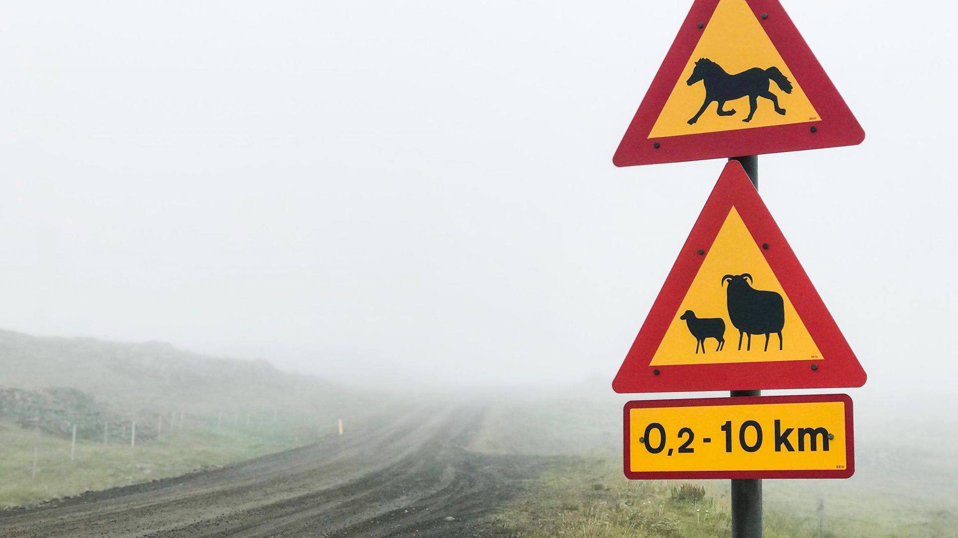 Road signs warn of sheep and horses, not lorries and motorbikes, and fog blurs the bumps and grooves of the coastline.