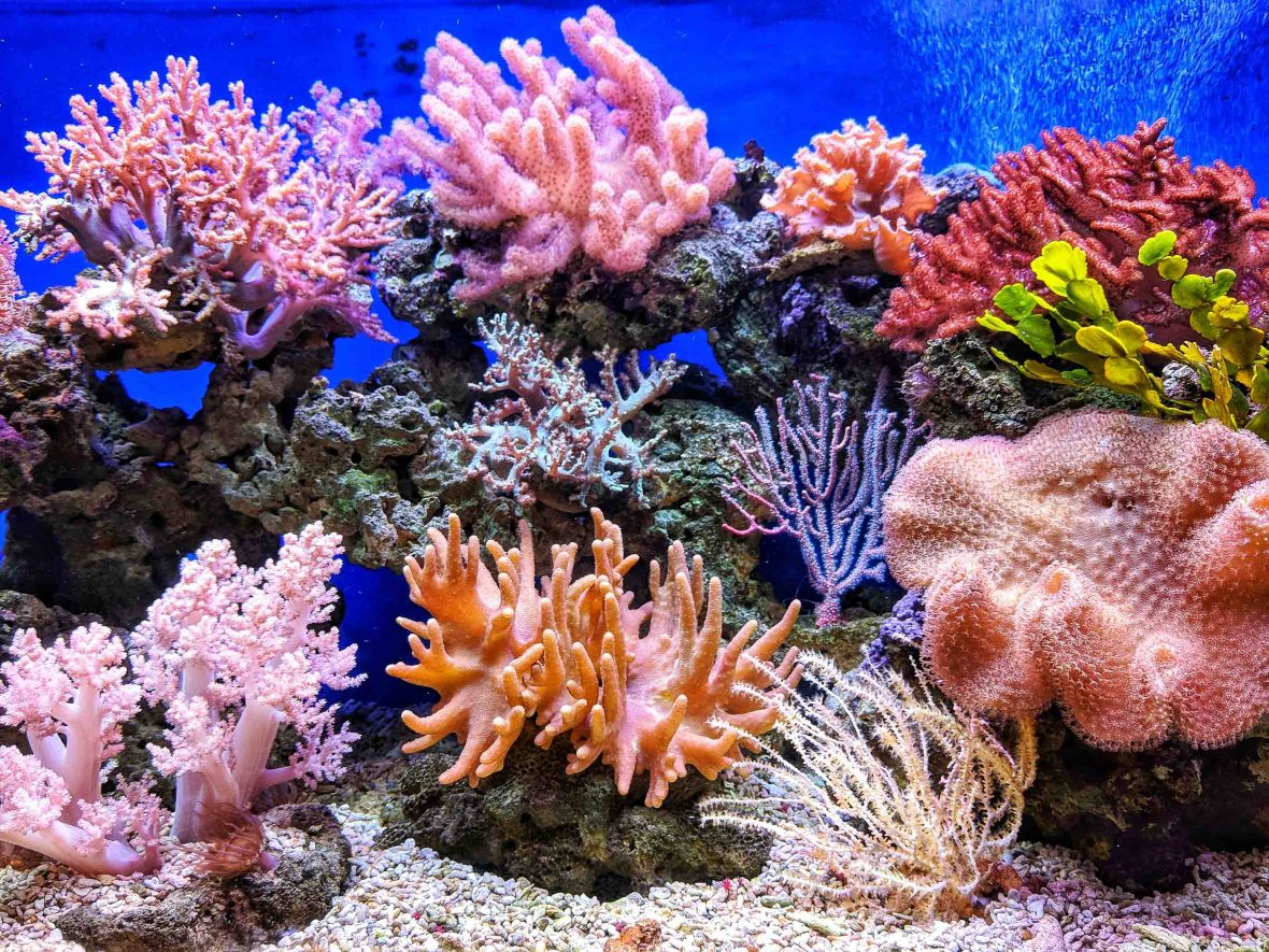 Travelers can take steps to help keep coral vibrant.