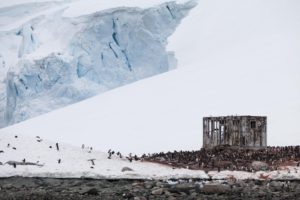 An abandoned base in Antarctica is surrounded by penguins.