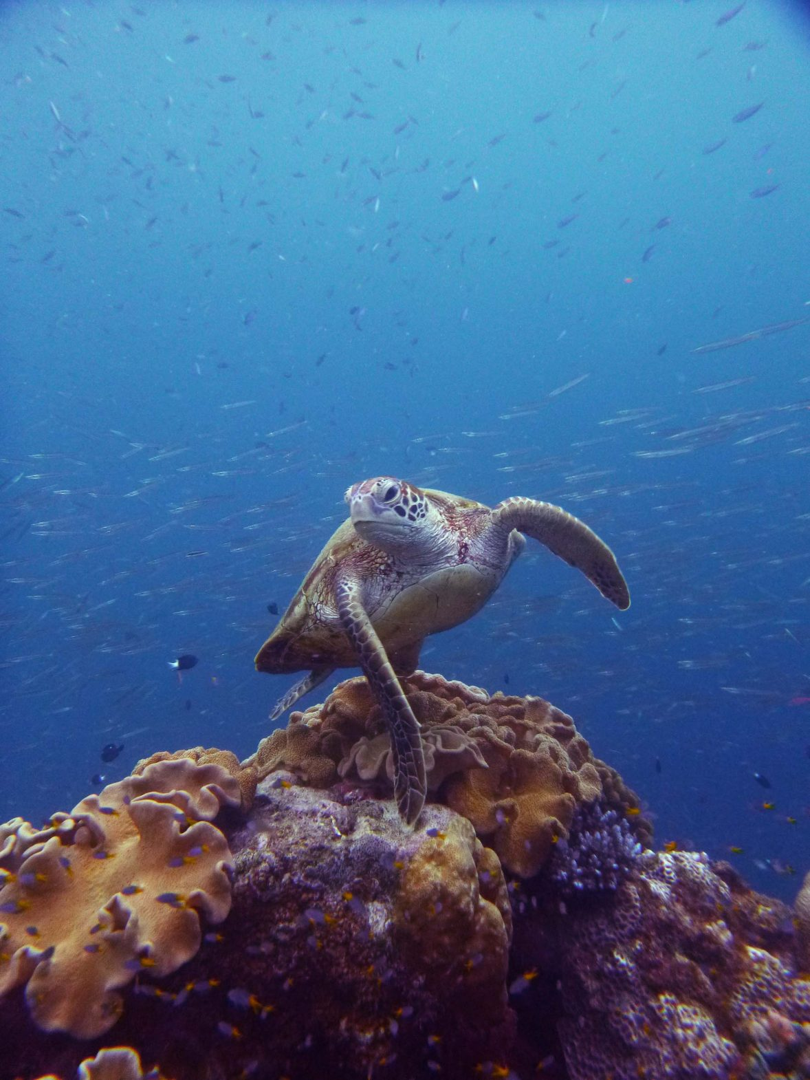 A turtle spotted on a trip to The Great Barrier Reef.