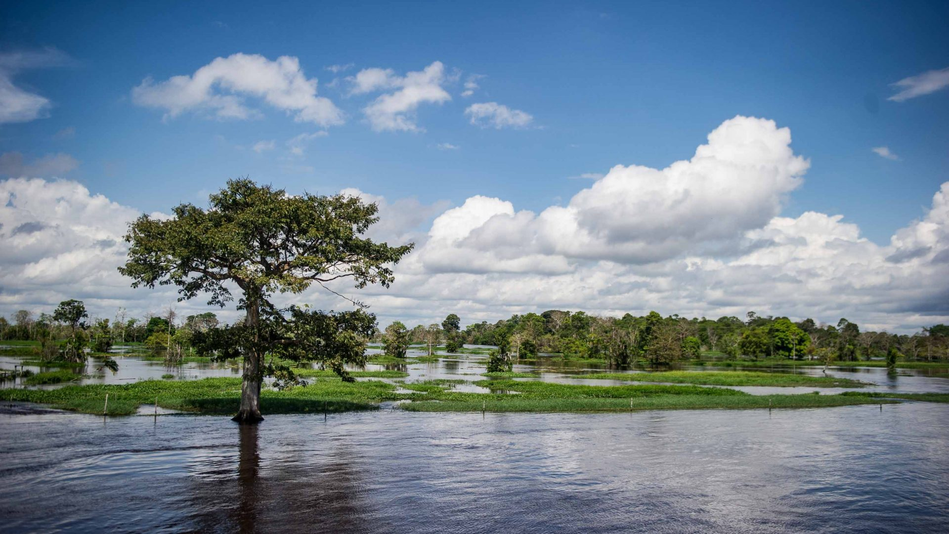 The Cisne Branco riverboat passes a flooded forest in the Amazon.