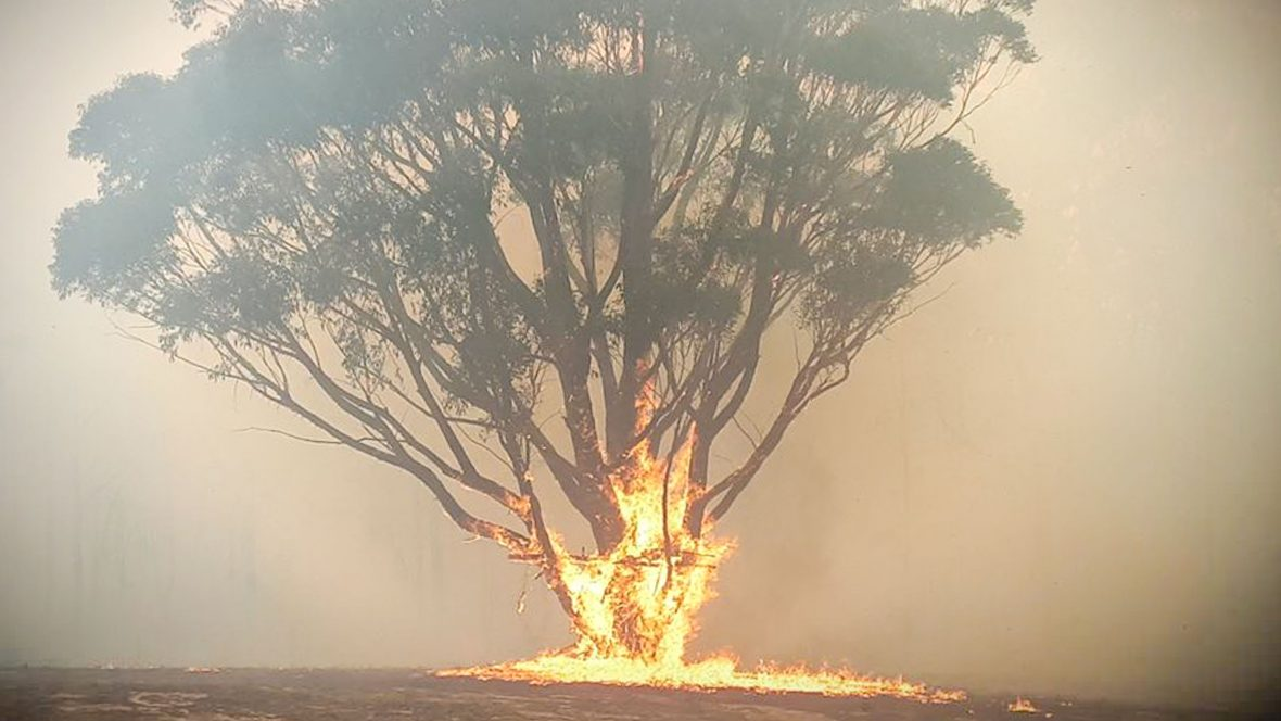 A burning tree in Bundanoon, New South Wales.