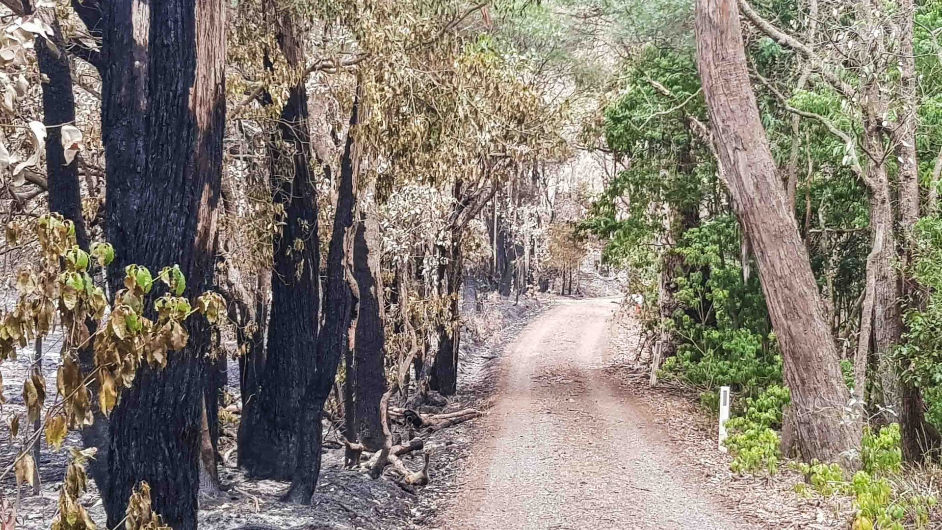 The charred trees in a lane in Bundanoon.