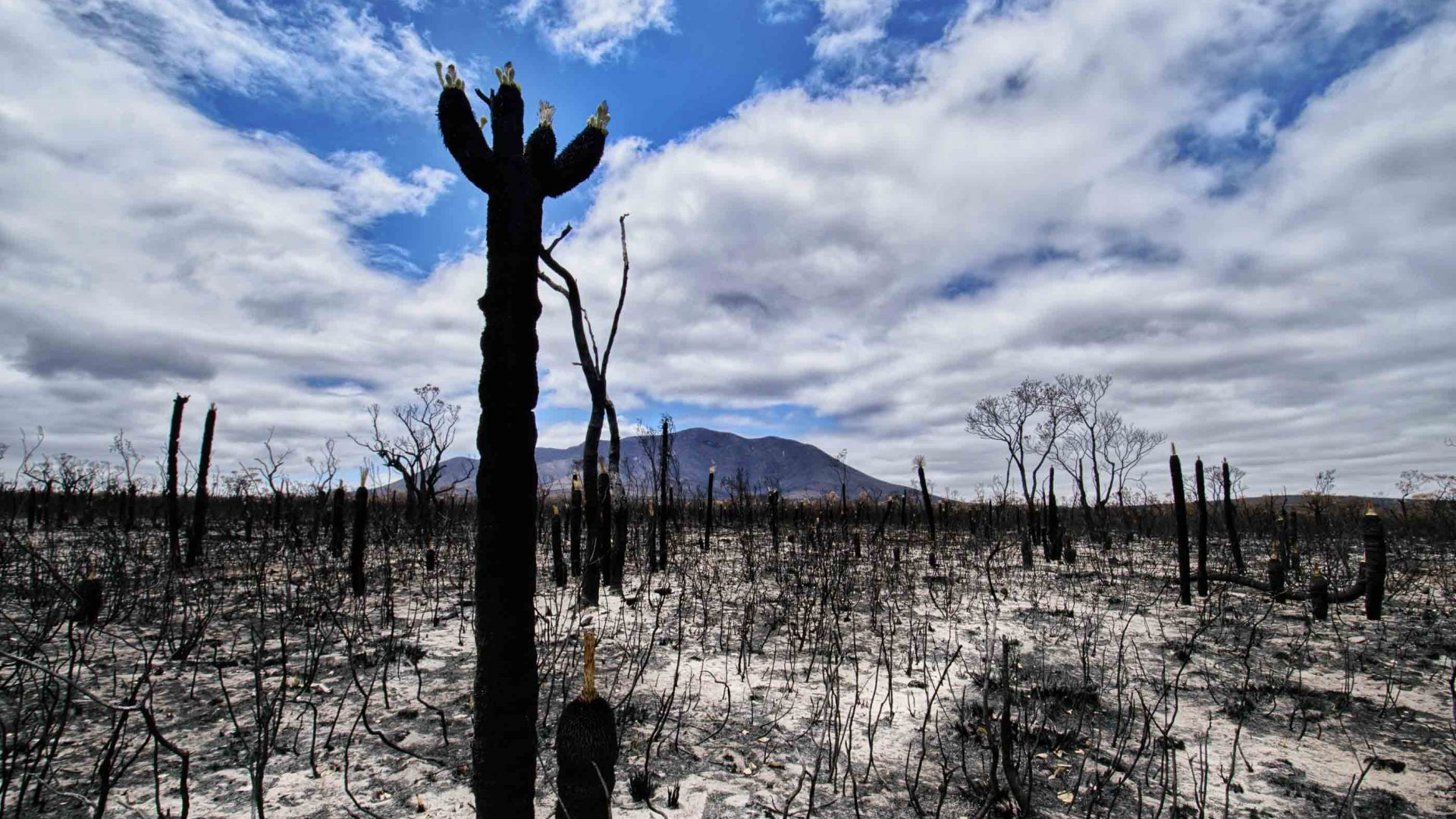 The scorched Australian landscape after a fire has swept through.