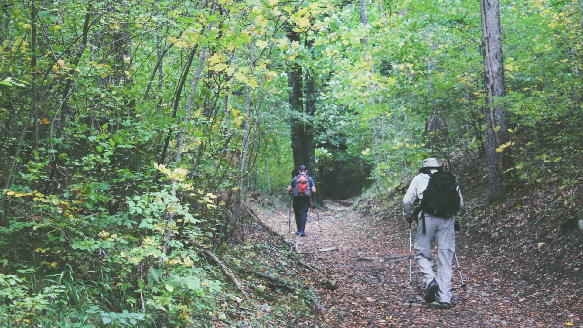 A forest path in Liechtenstein.