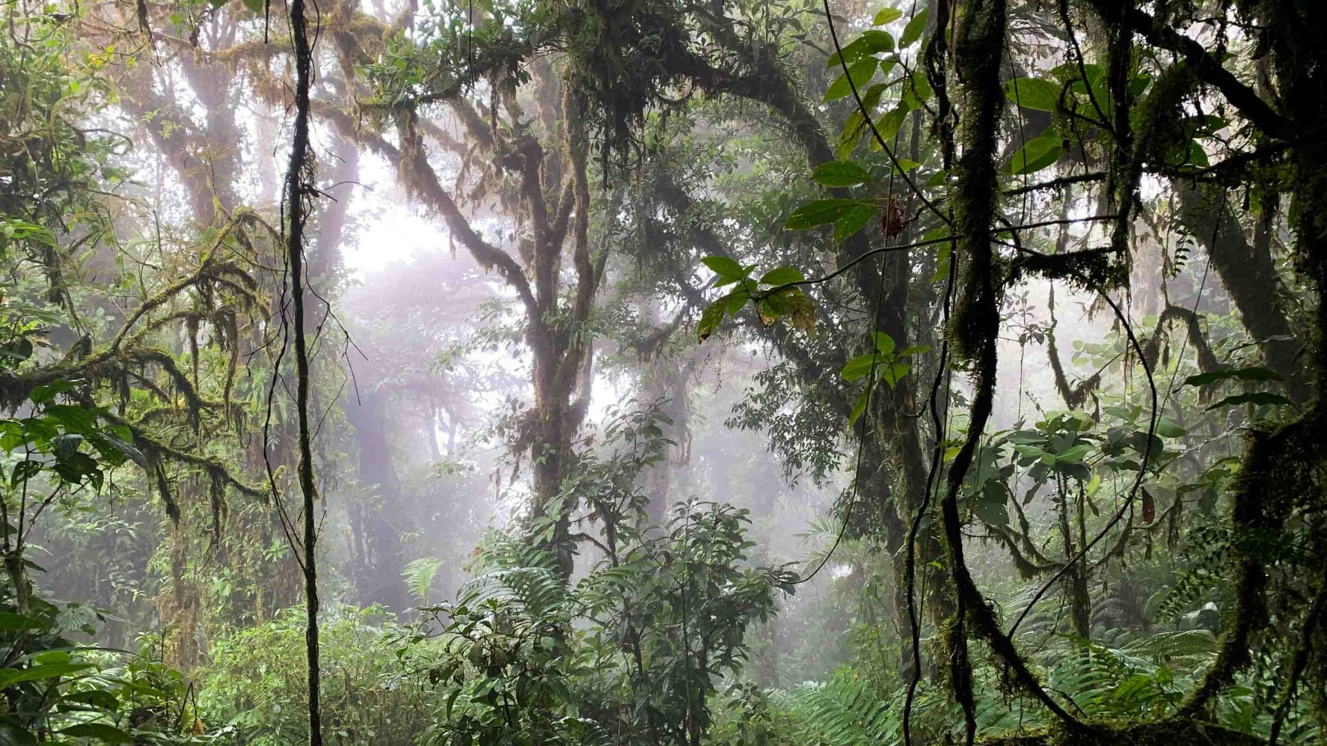 Solo travel: Monteverde Cloud Forest, Costa Rica.