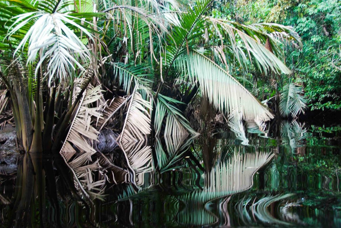 Lowland rainforest on the island of Borneo, Indonesia.