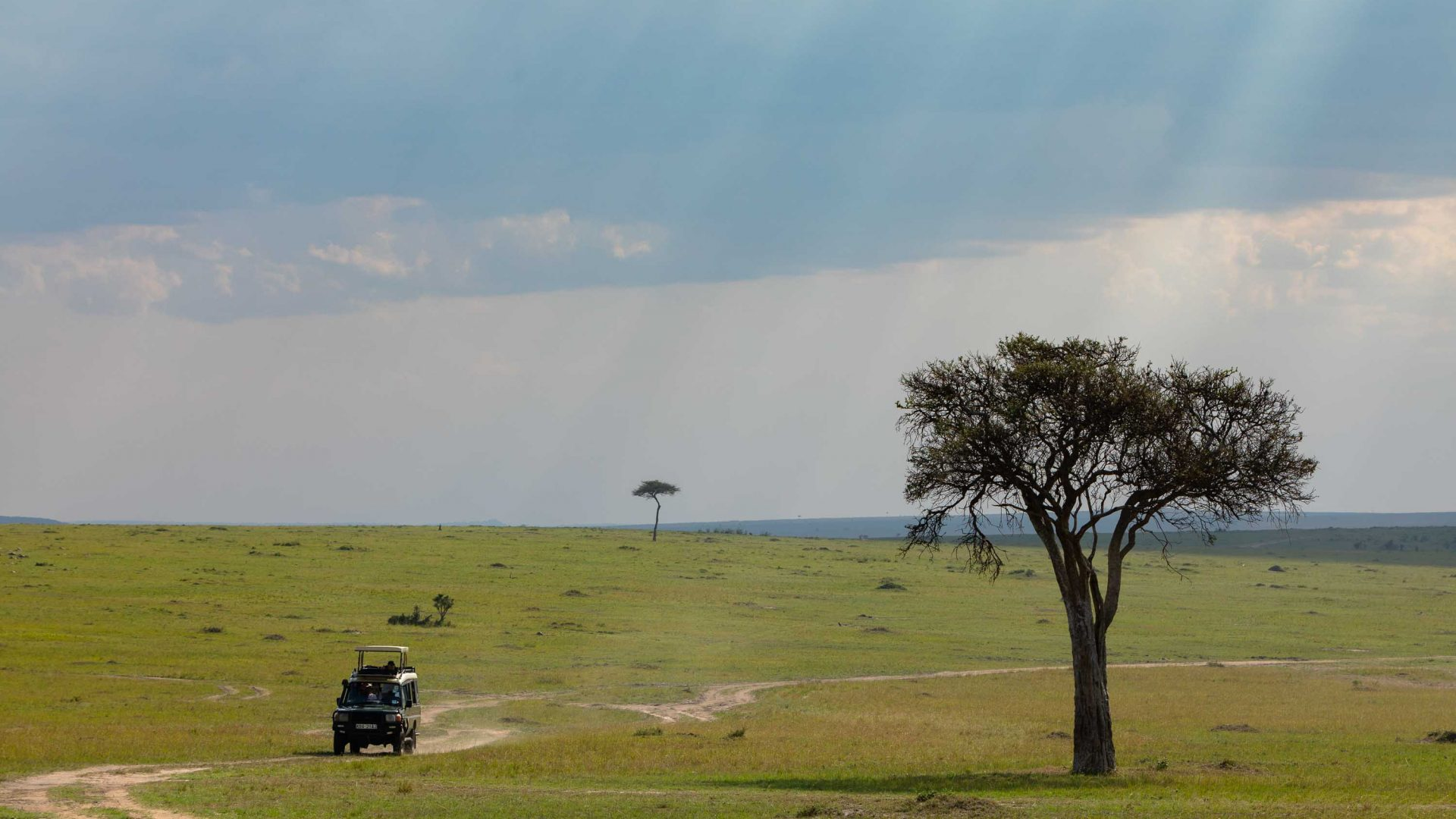 Intrepid Travel on a game drive in the Masai Mara.