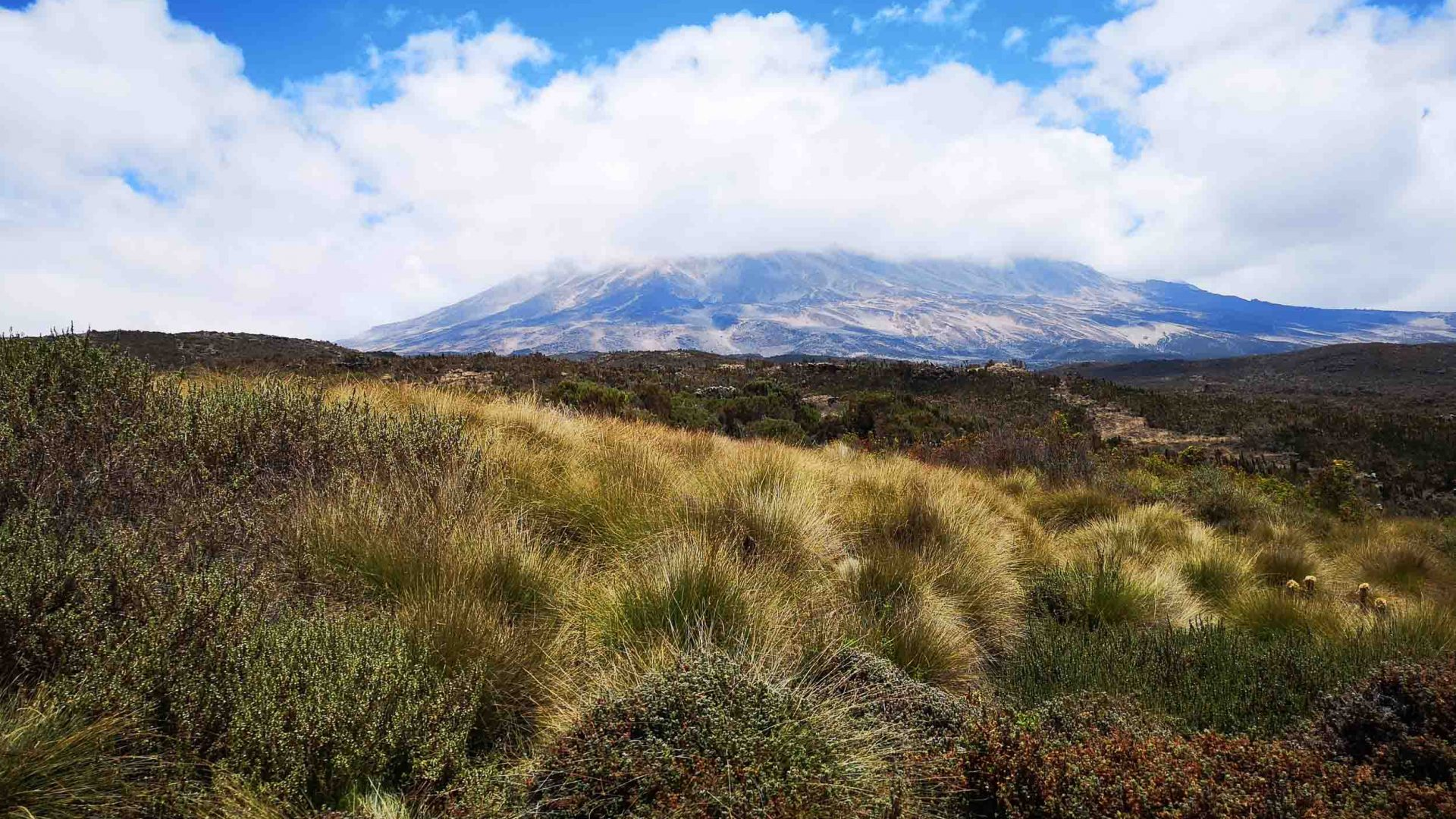 Mount Kilimanjaro in the distance.