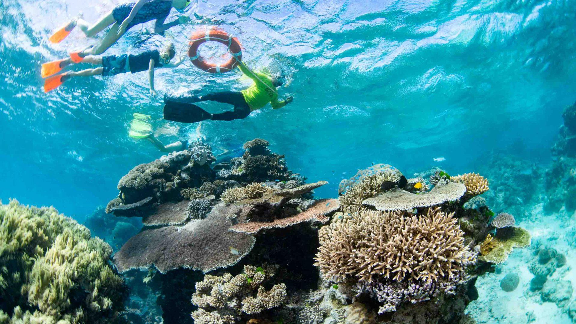 Snorkelers seen from below turquoise water.