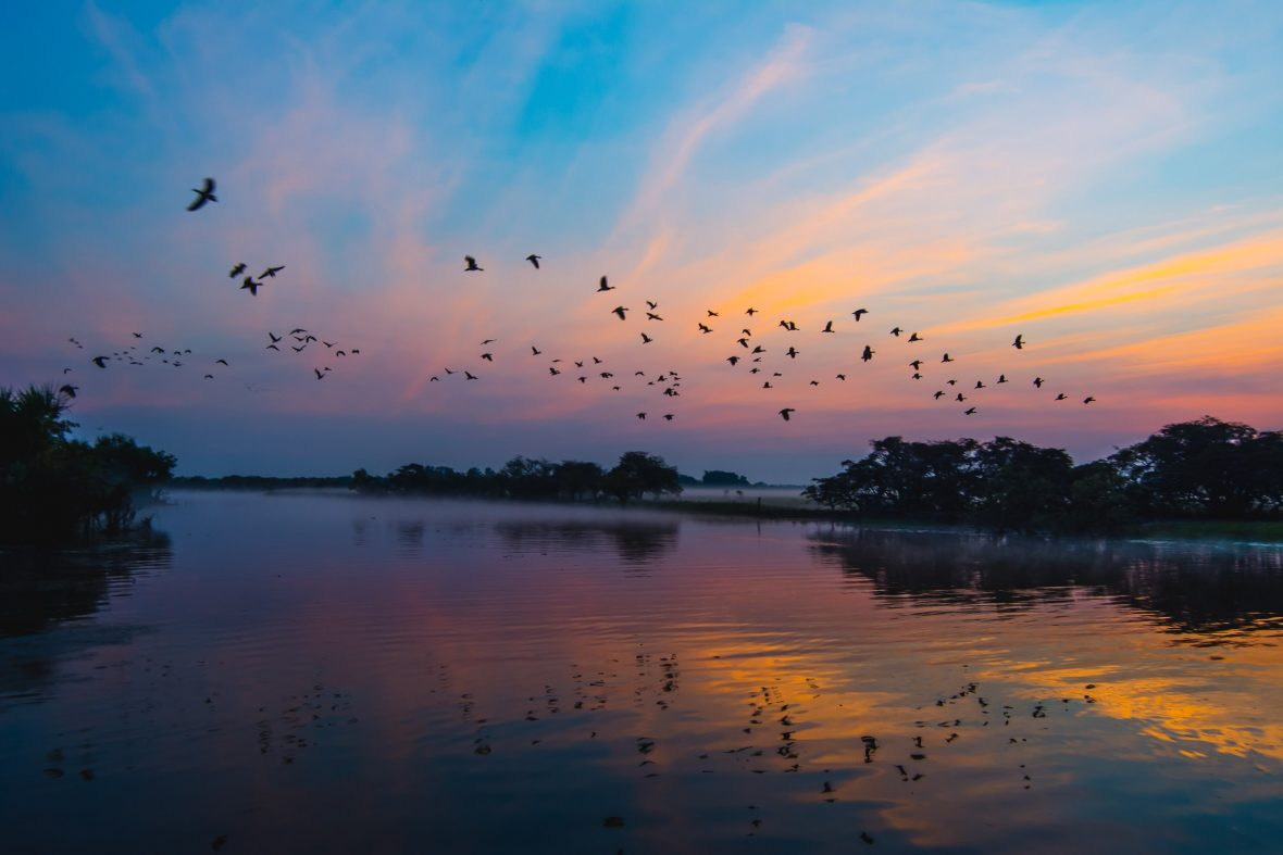 Birds flying over water at sunset.