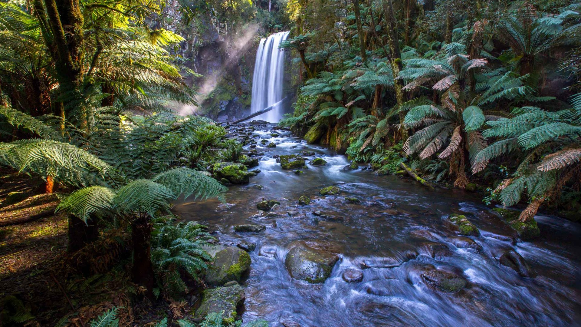 A waterfall surrounded by green ferns.