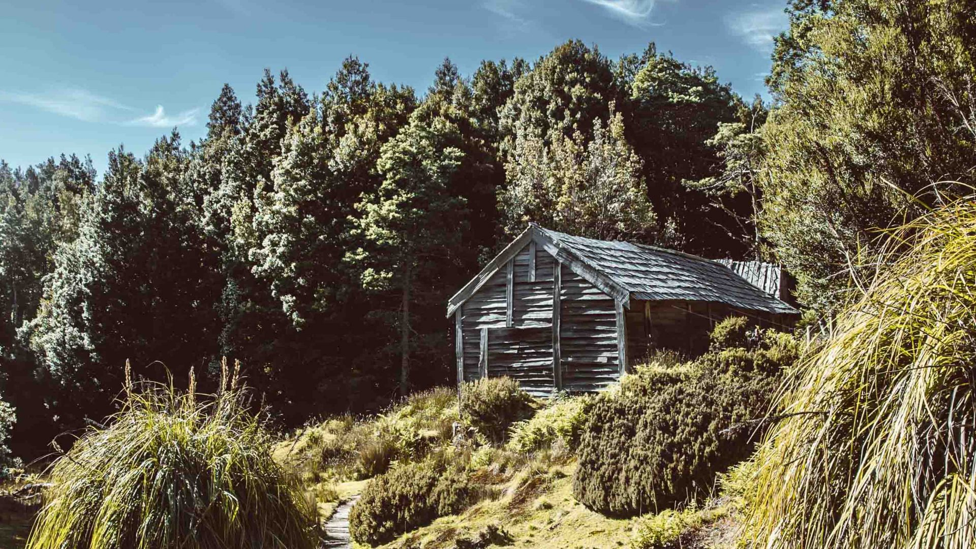 A wooden hut sits amongst trees.