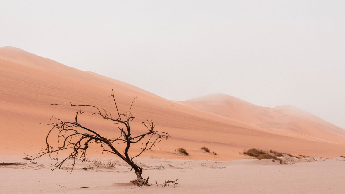 Desert sand and dunes in the background with a bare tree leaning over in the foreground.