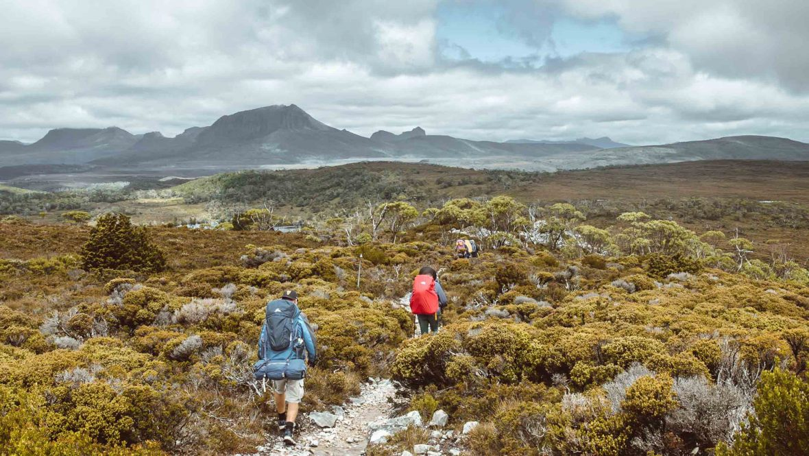 Hikers on the Overland Track.