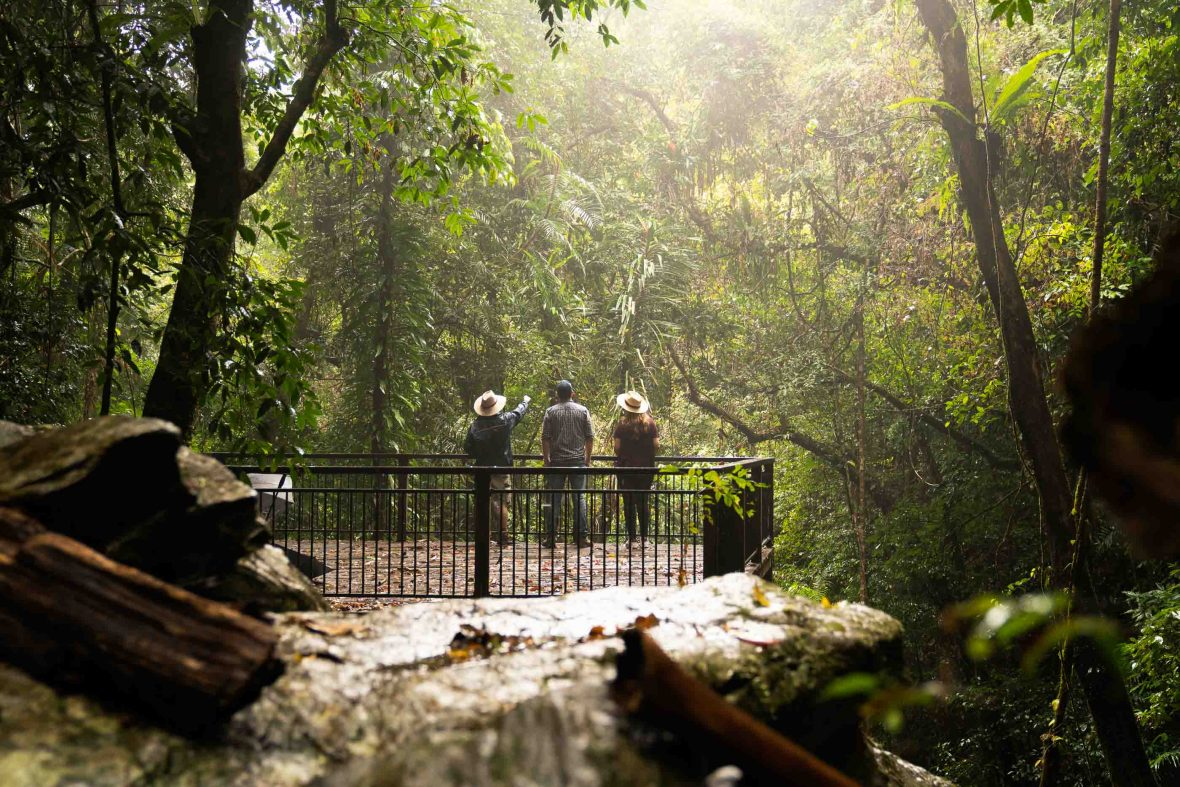 Travelers enjoy the forest from a viewing platform.