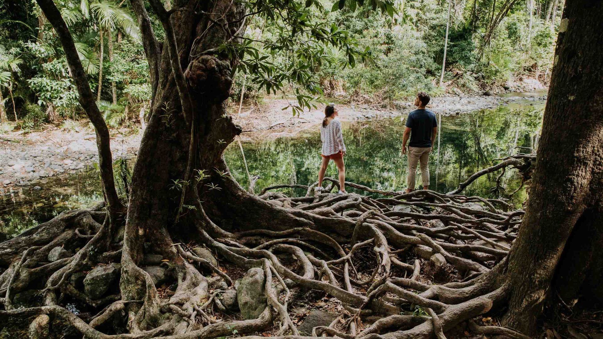 Two people stand by a tree with as complex root system.