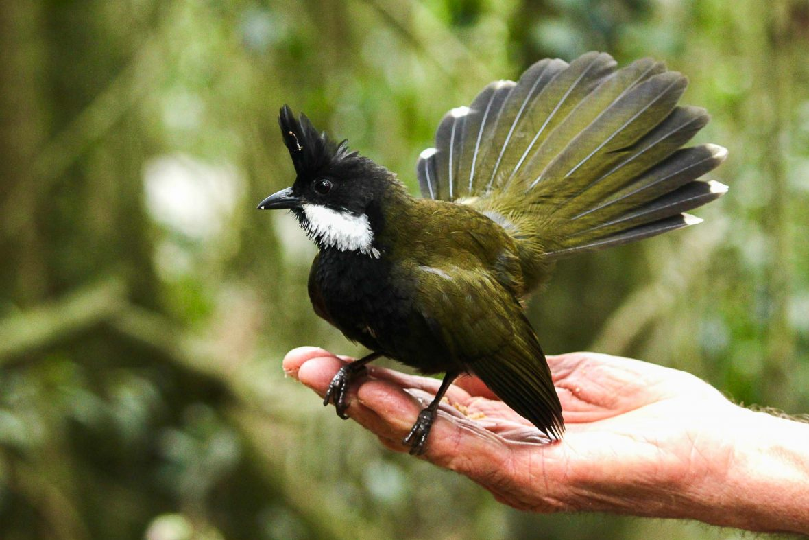 A black and white bird sitting on someones hand.