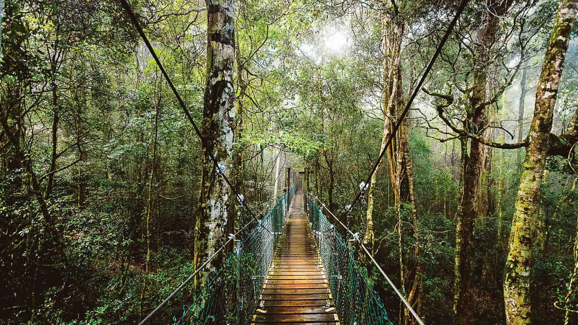 A wooden boardwalk through forest.