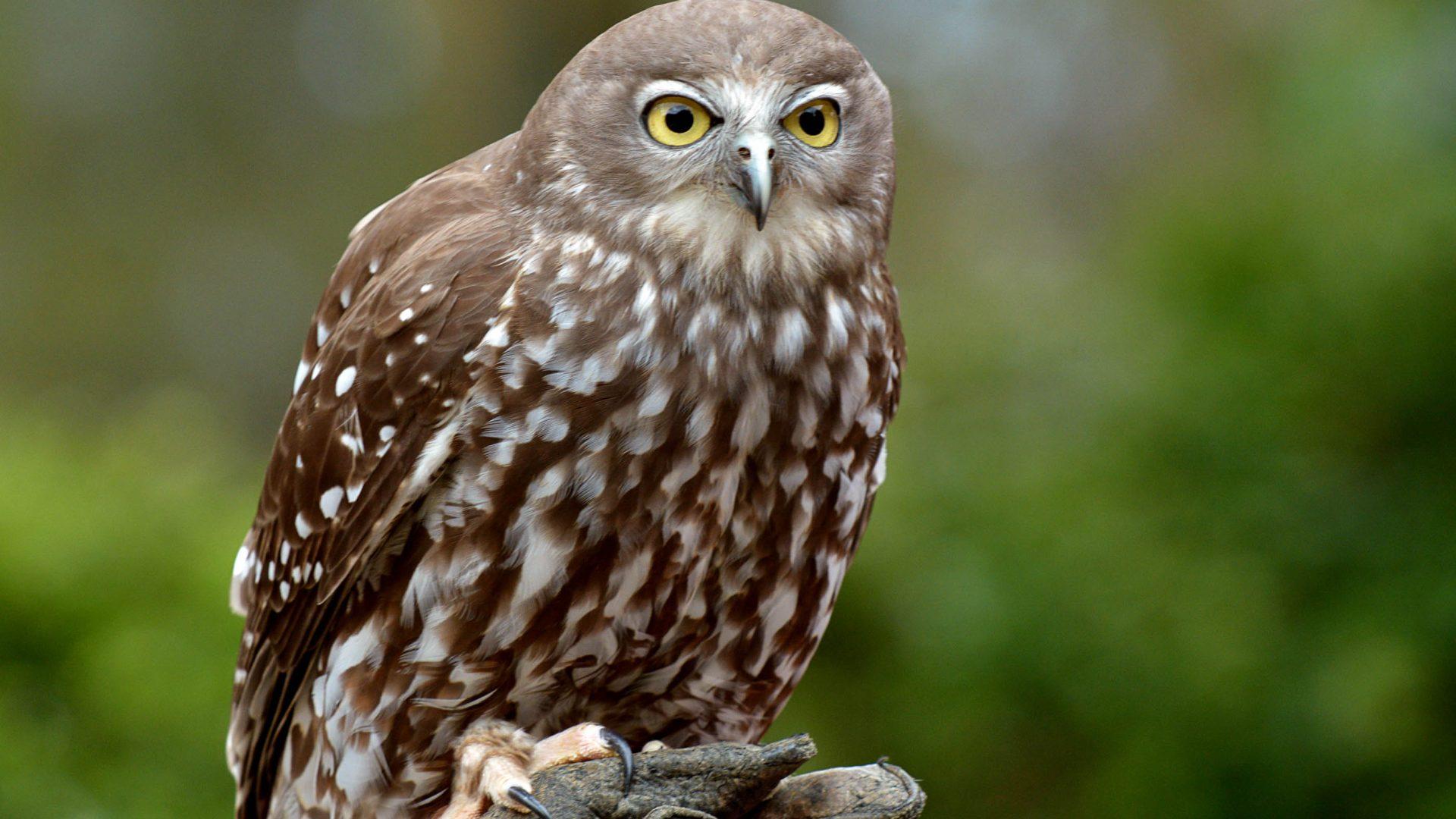A brown speckled bird.
