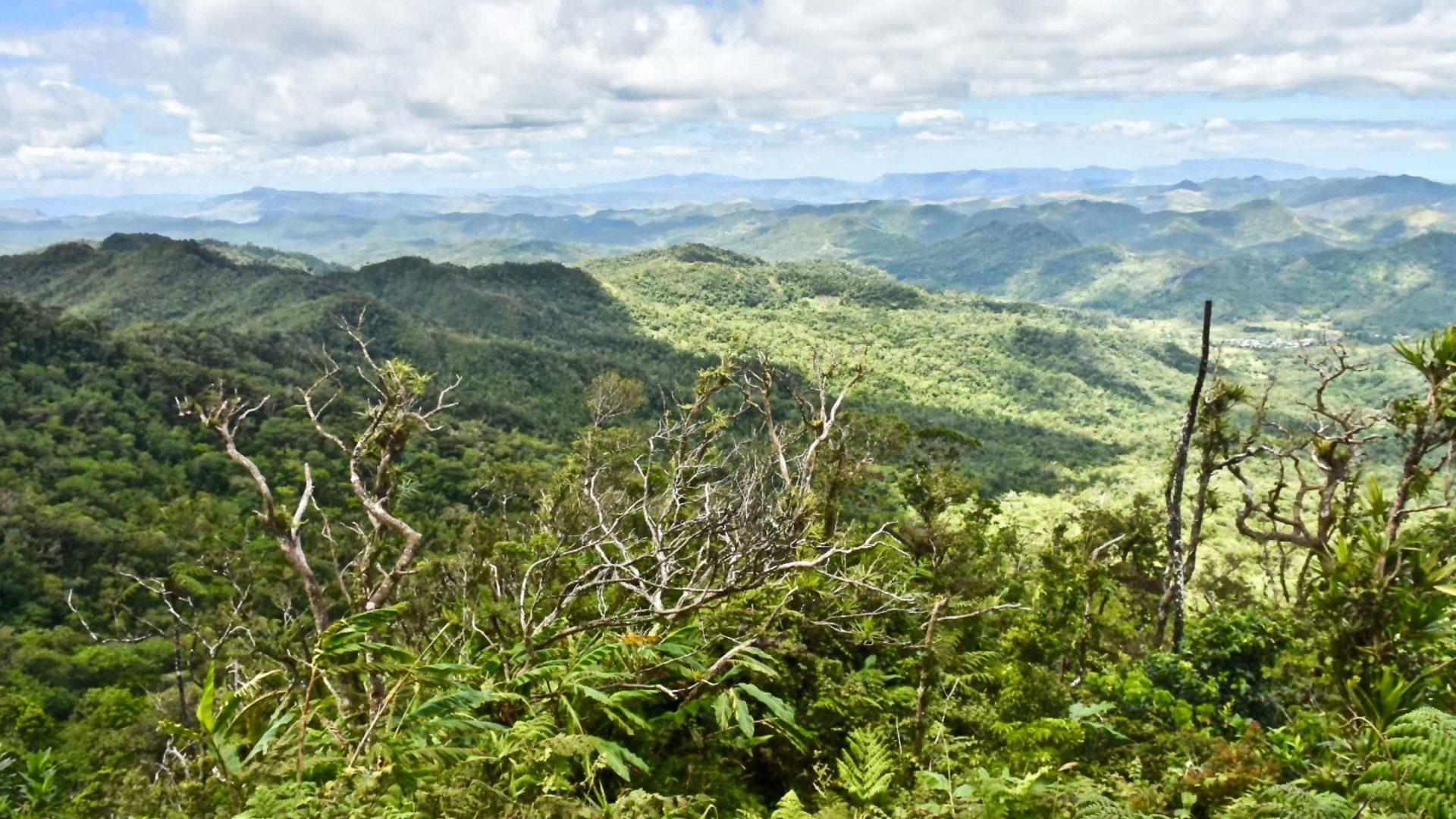 Views of a lush green landscape.