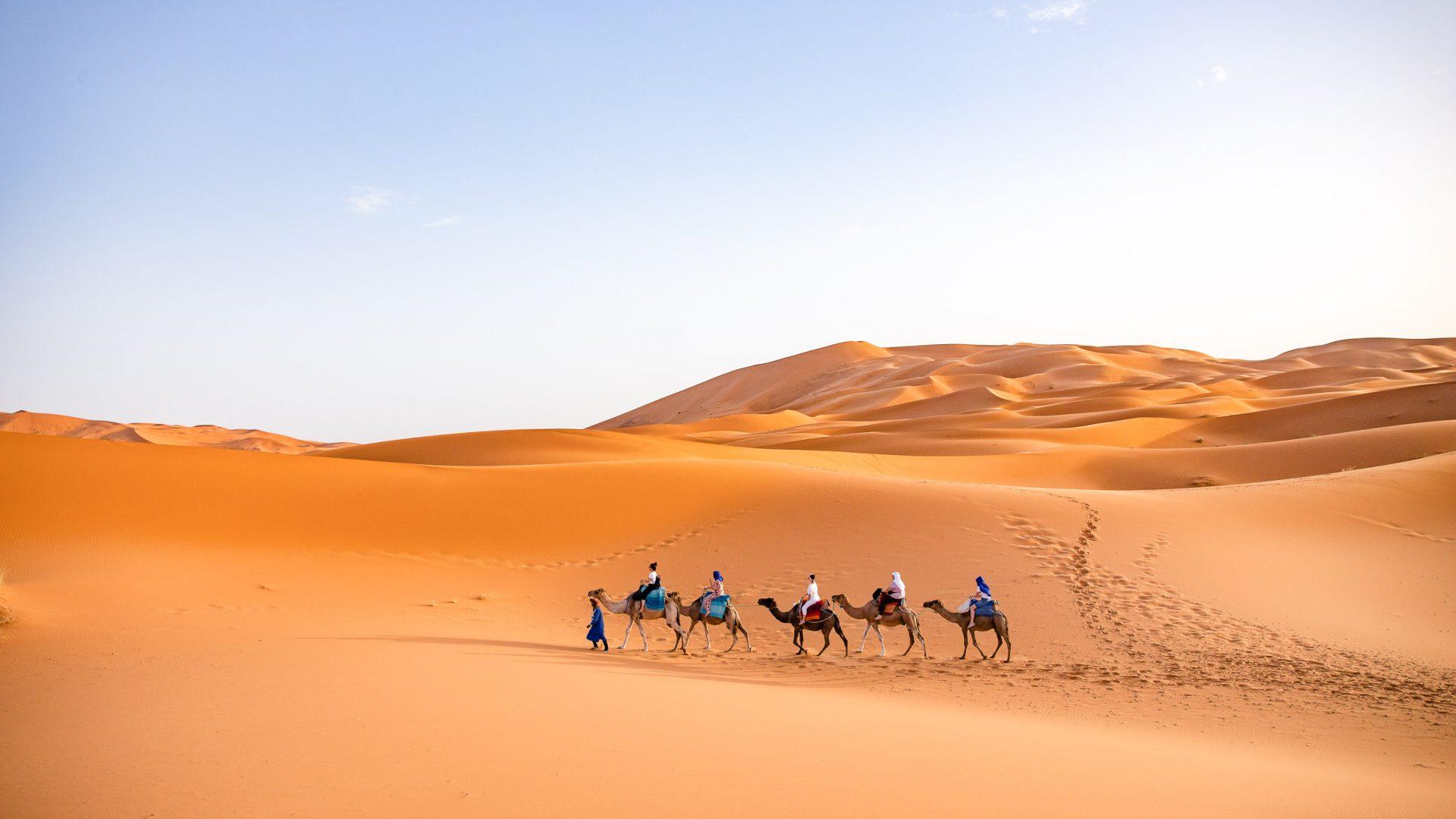 Camels crossing the Sahara.