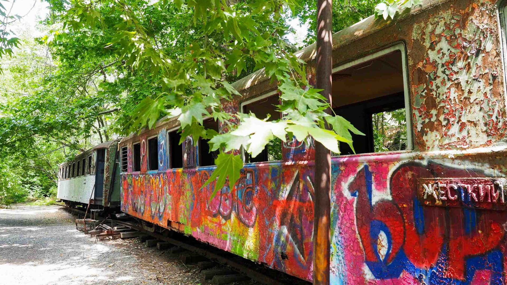 Colored grafiti covers the old train carriages.