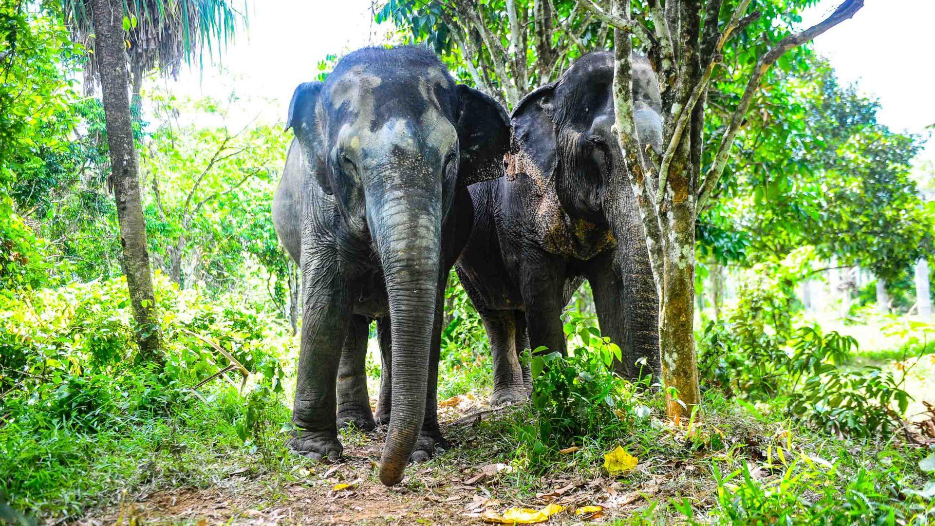 Elephants under a tree.
