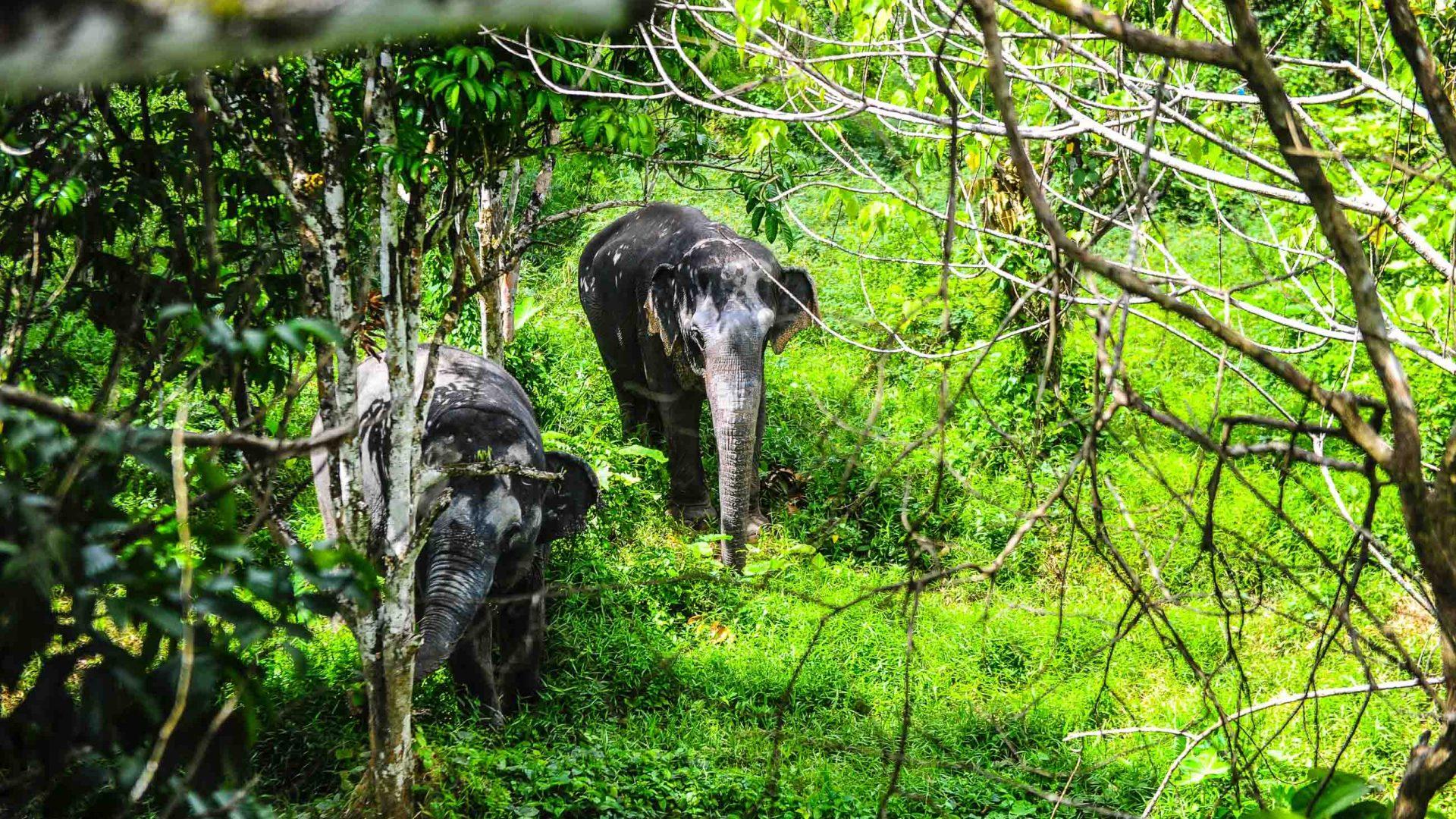 Elephants walking through the trees.