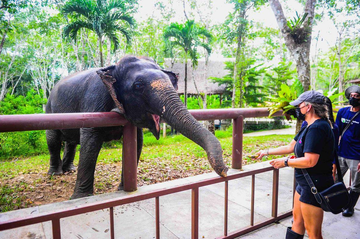 Someone feeding an elephant over a fence.