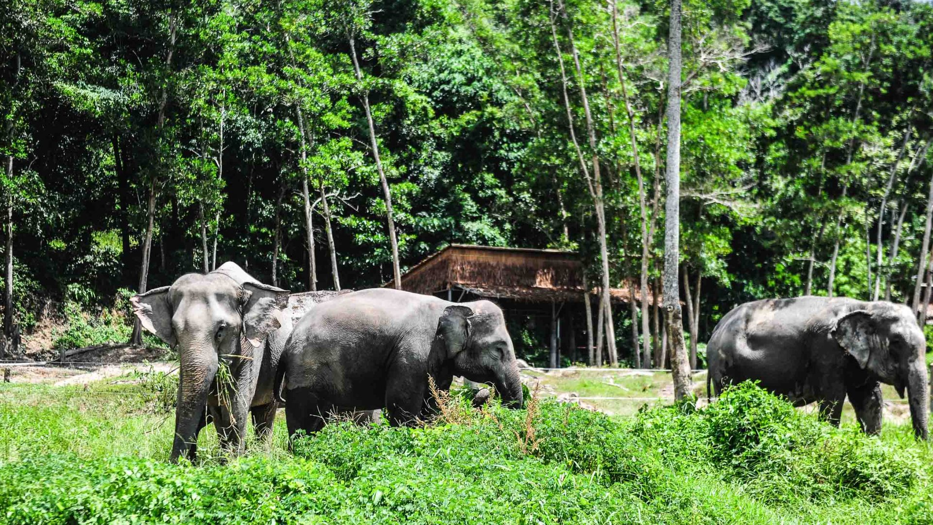 Elephants at the reserve.