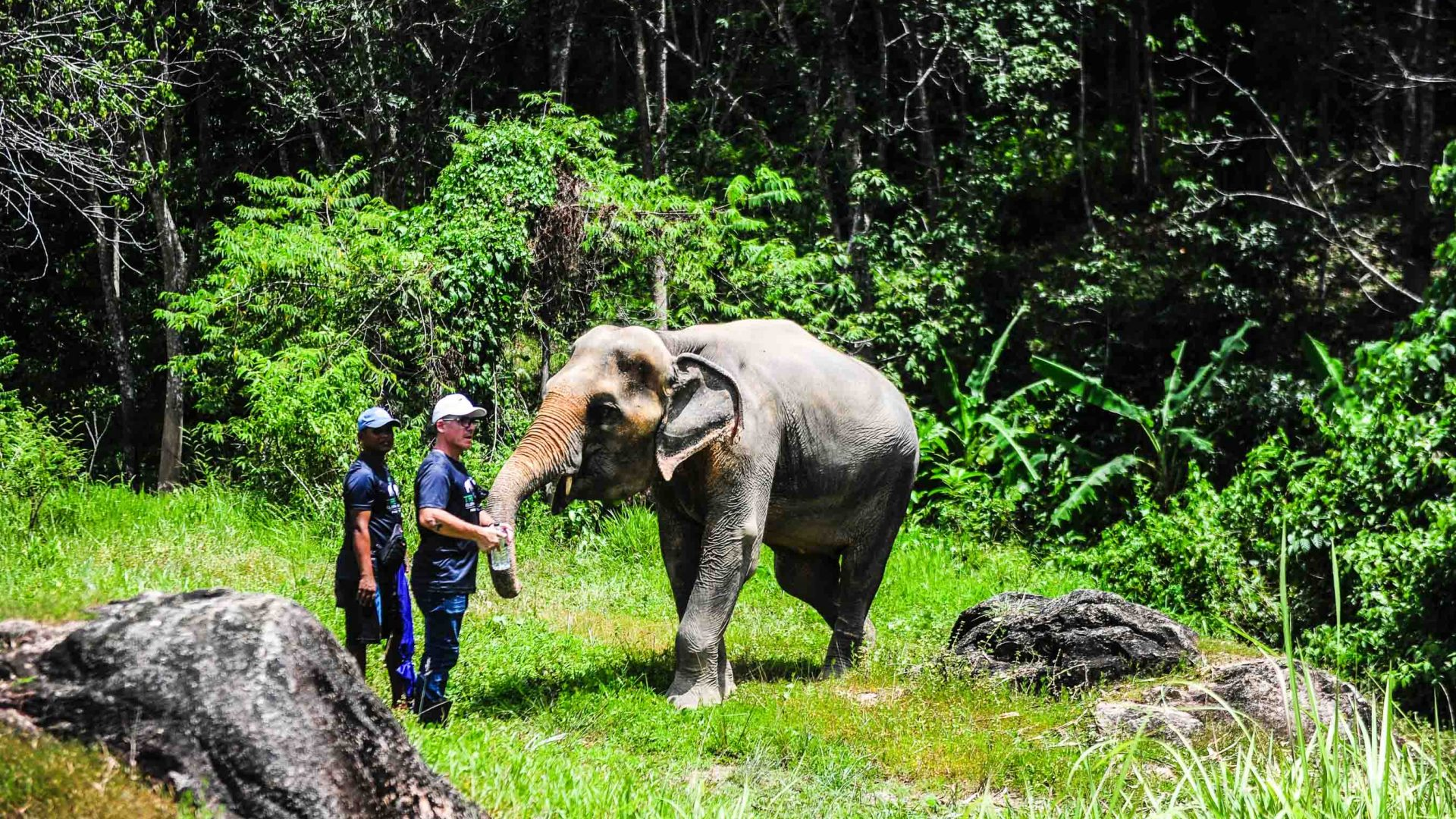 Two men stand with an elephant in green surrounds.