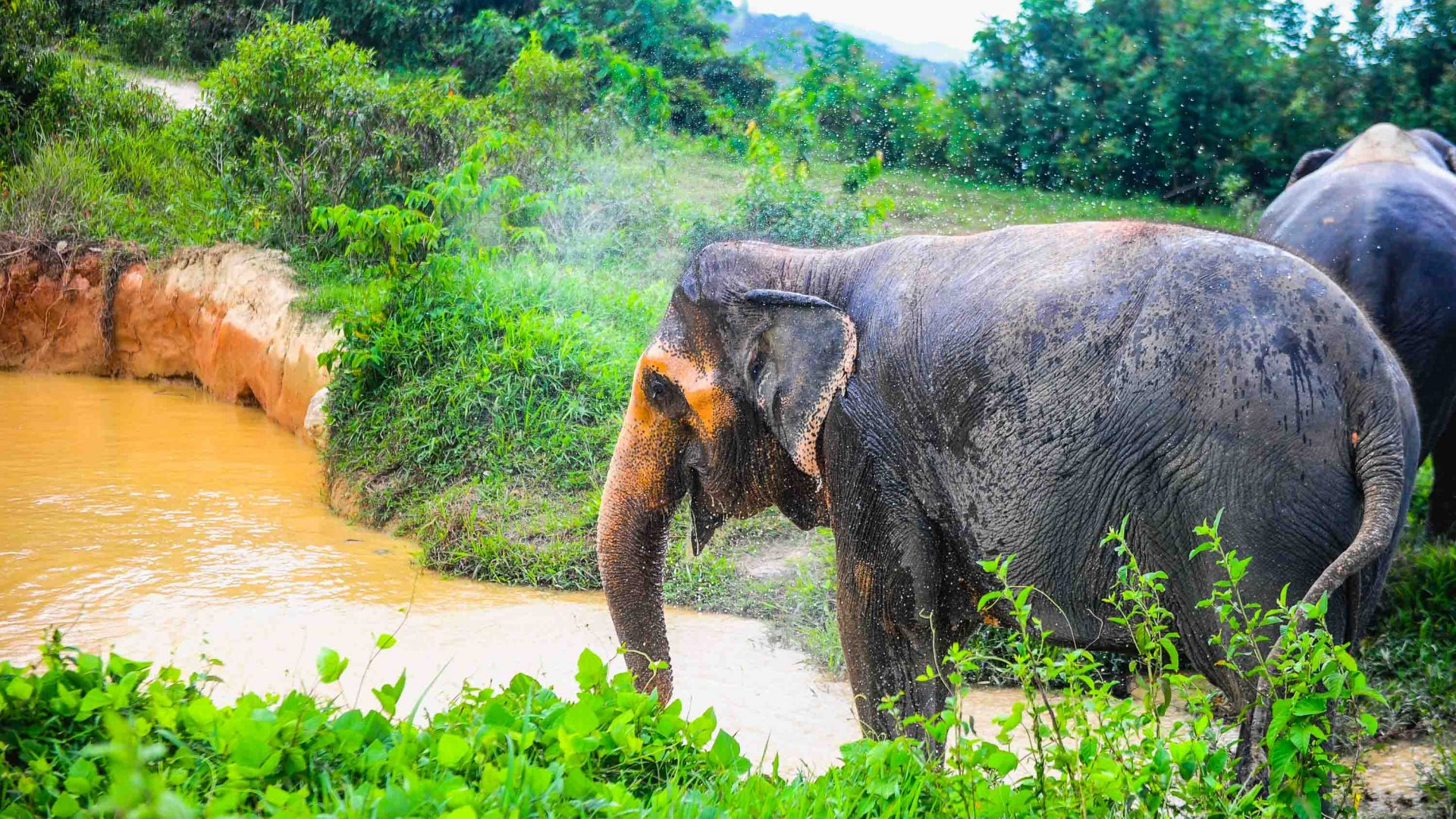 An elephant by a body of brown water.
