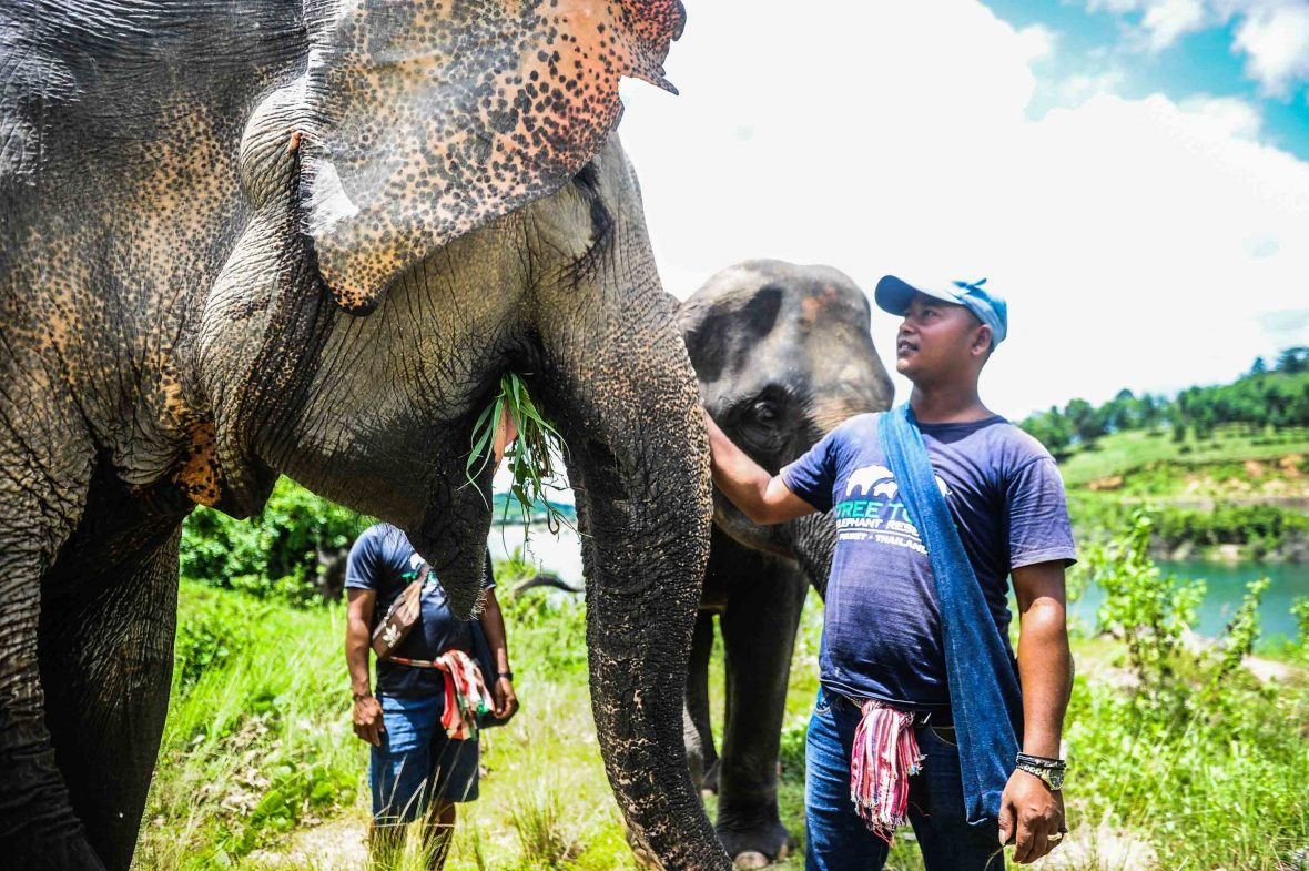 A mahout with the elephants he cares for.